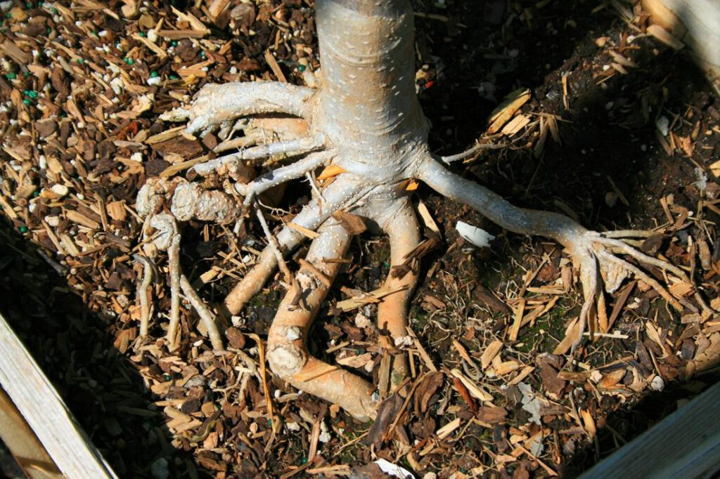 euless-foundation-repair-root-barrier-2_orig